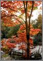 Fall Maple - Rock City, Georgia