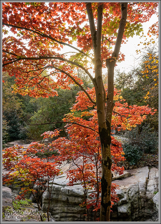 Fall Maple - Rock City, Georgia